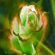 Motley Rose Live Wallpaper by Daksh Apps