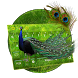 Peacock Feather Keyboard by creative 3D Themes
