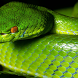 Snakes Wallpapers by artur