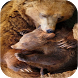 Bear Wallpapers by Zexica Apps