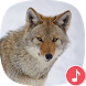 Appp.io - Coyote Sounds and Calls by Appp.io
