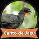 Canto de Jacu Passaros by Canto Media