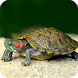 Turtle Live Wallpaper by DreamWallpapers