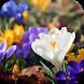 Amazing Spring Flowers by WpStar