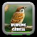 Kicau Burung Gereja Masteran by AD Apps