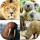 Animals Quiz - All Mammals Zoo by Andrey Solovyev