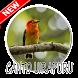Cantos Da Ave Uirapuru by Abal69Dev