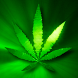 Marijuana Live Wallpaper - Green Leaf FREE