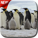 Penguins Video Live Wallpaper by Video Themes Pro