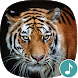 Appp.io - Tiger Sounds by Appp.io