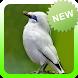 Kicau Burung Jalak Bali Terbaru by Topek App