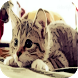 Cat Quiz by Mr.Quiz