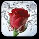 Rose Live Wallpaper by Selfie