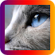HD Cats Wallpaper by ChevronGroup
