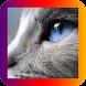 HD Cats Wallpaper by ChevronGroup