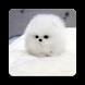 Puppy Wallpaper by Big Fresh Apps