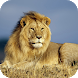 Lion Wallpapers by Dabster Software