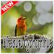 Canto Da Uirapuru Verdadeiro Cyphorhinus