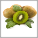 New Kiwi Fruit Onet Game by Android Fruits Onet Game