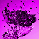 Purple Watery Rose LWP by Daksh Apps