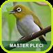Masteran Pleci Terlengkap by Adnani lab