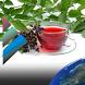 Heilkräuter aus der Natur by Pocketkai
