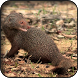 Mongoose Wallpapers by HAnna