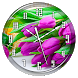 Purple Tulips Clock Live WP by Lo Siento