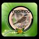 Cantos de Tico Tico Offline by Putra dan Putri Dev