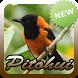 Kicau Burung Pitohui Terbaru by Topek App