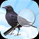 Vogels e.a. fauna determineren by Oronra.development