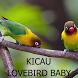 Kicau Lovebird Balibu / Baby by Tidut app