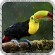 Toucan Pack 2 Wallpaper by LiveHD