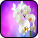 Orchid Wallpapers by aifzcc.studio