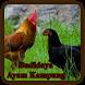 Budidaya Ayam kampung by E-book App
