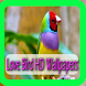 Love Birds HD Wallpapers by ngecrut
