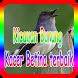 Kicauan Burung Kacer Betina terbaik by takumidev
