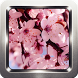 Cherry Blossom Wallpapers by Omah Pandega