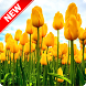 Tulip Wallpaper by Pinza