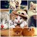gambar kucing lucu by nandarjoss