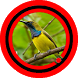 Suara Burung Sogok Ontong Special Mp3 by Omasuhu