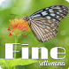 Fine Settimana by V.S.J studio