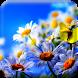 HD Summer Flower Wallpaper by Best HD Free Live Wallpapers