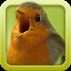 Vogelstimmen-Trainer 2.0.1 by INNOMOS GmbH
