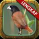 Kicau Ngekek Burung Pipit by Kicau Studio