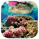 Coral Reef Live Wallpaper by Live Wallpaper 3D