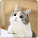 Cute Cat HD Wallpapers by RSOFT Apps