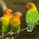 Kicau Terapi Burung Lovebird Paud by Tidut app