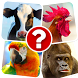 Memory Game: Animals by Premium Software