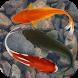 Beautiful Fish Screensaver Fre by PHOENIX NIRVANA